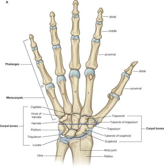 Hand and Wrist Injuires